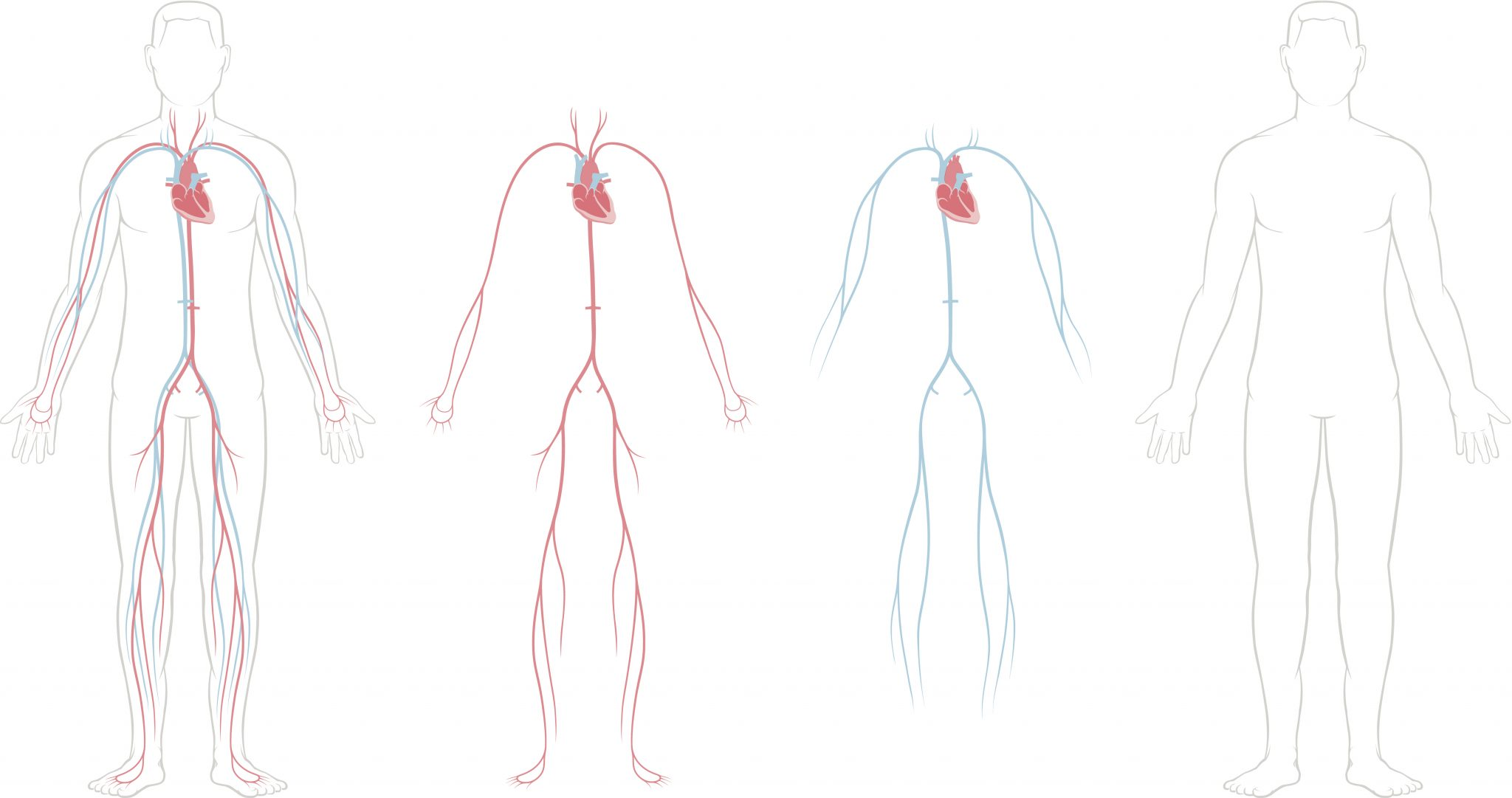Respiratory System Drawing