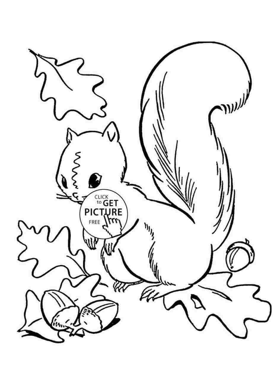 Coloring Easy Simple Squirrel Drawing Novocom Top