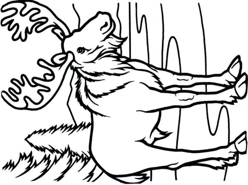 2nd grade coloring pages  free download on clipartmag