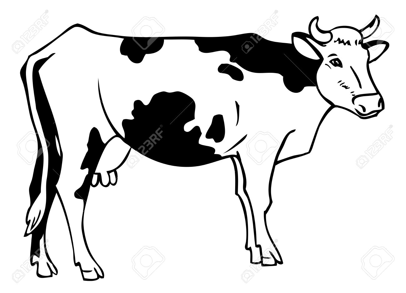Black And White Cow Pictures
