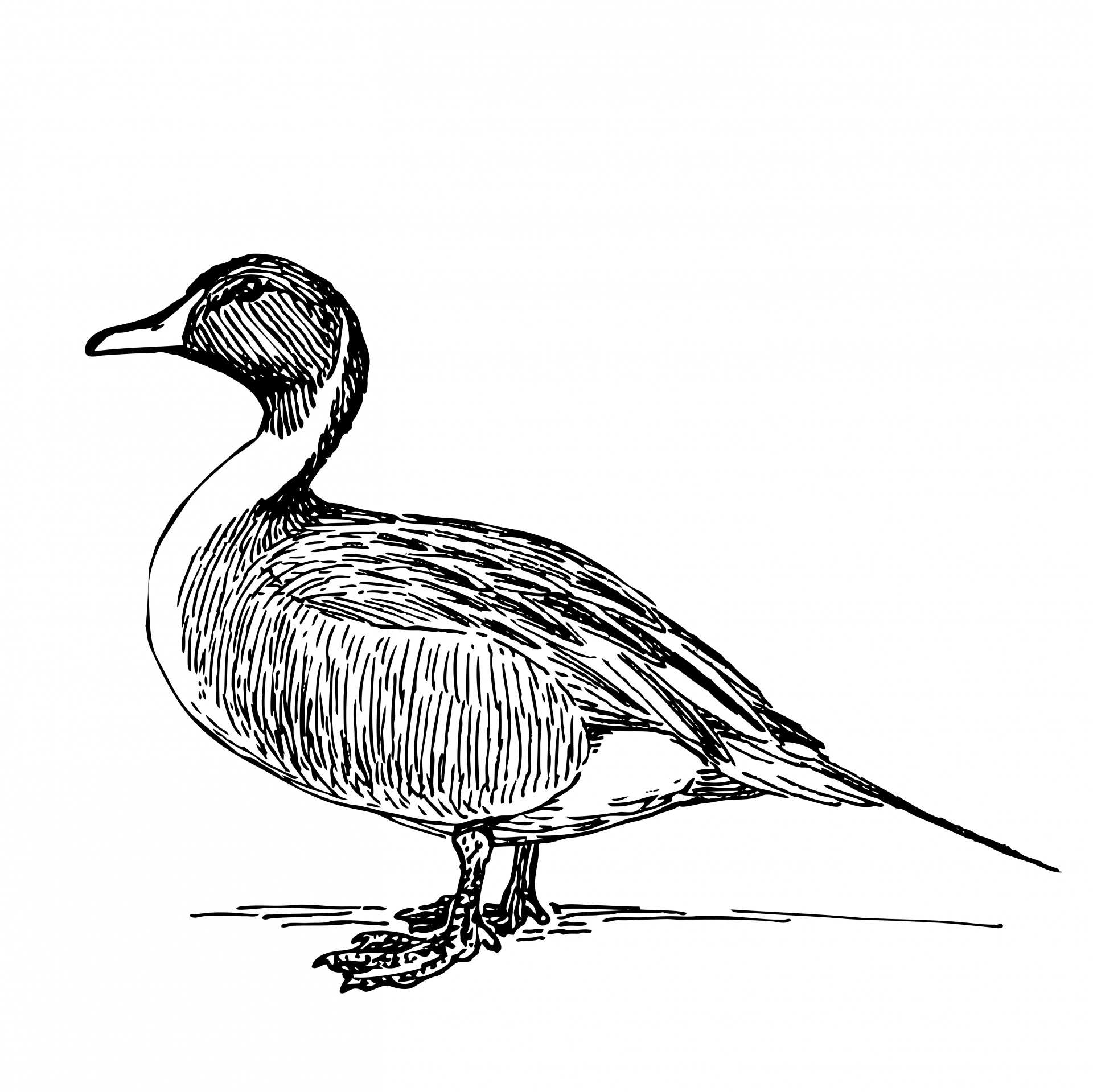 Duck Clipart Black And White
