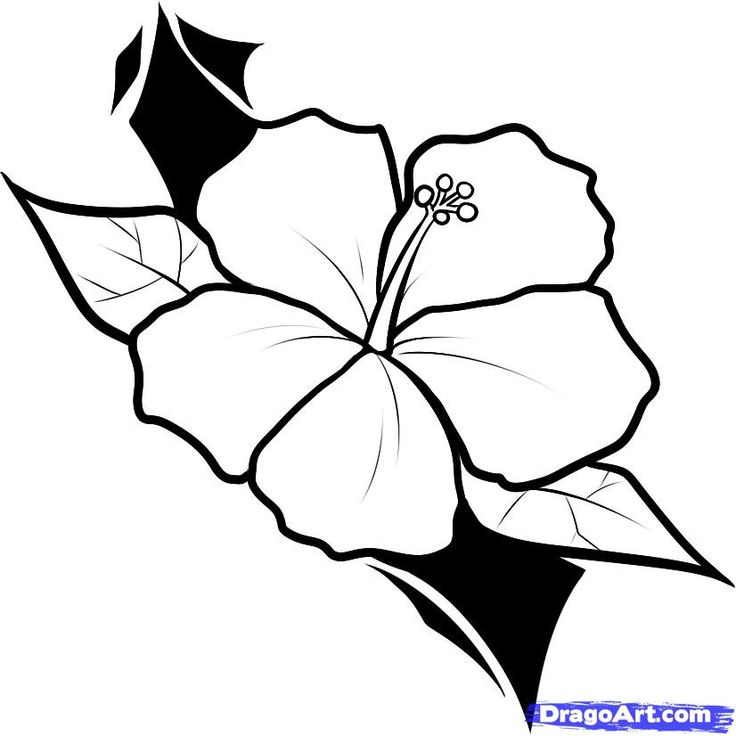 Hawaiian Flower Outline | Free download on ClipArtMag