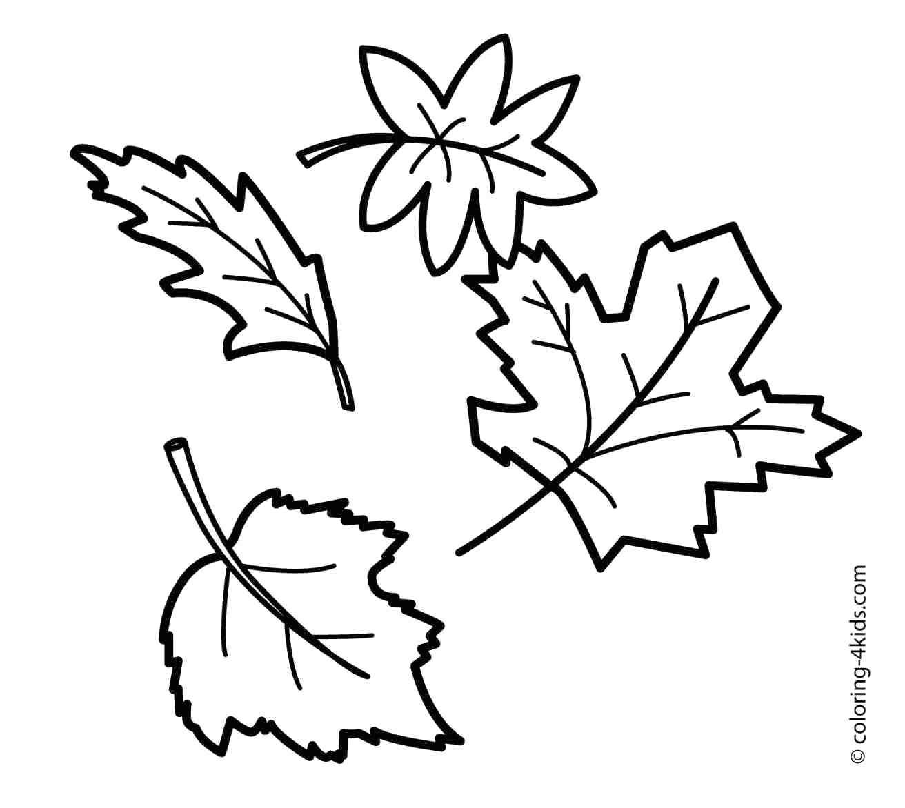 Holly Leaf Outline