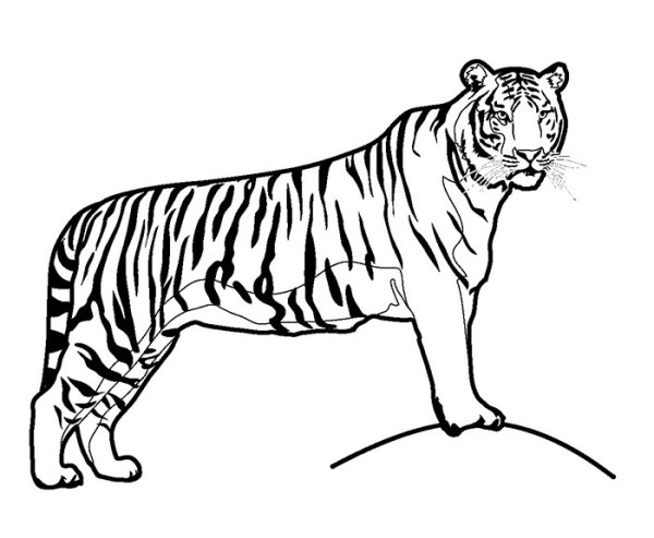 animal coloring pages printable # 80