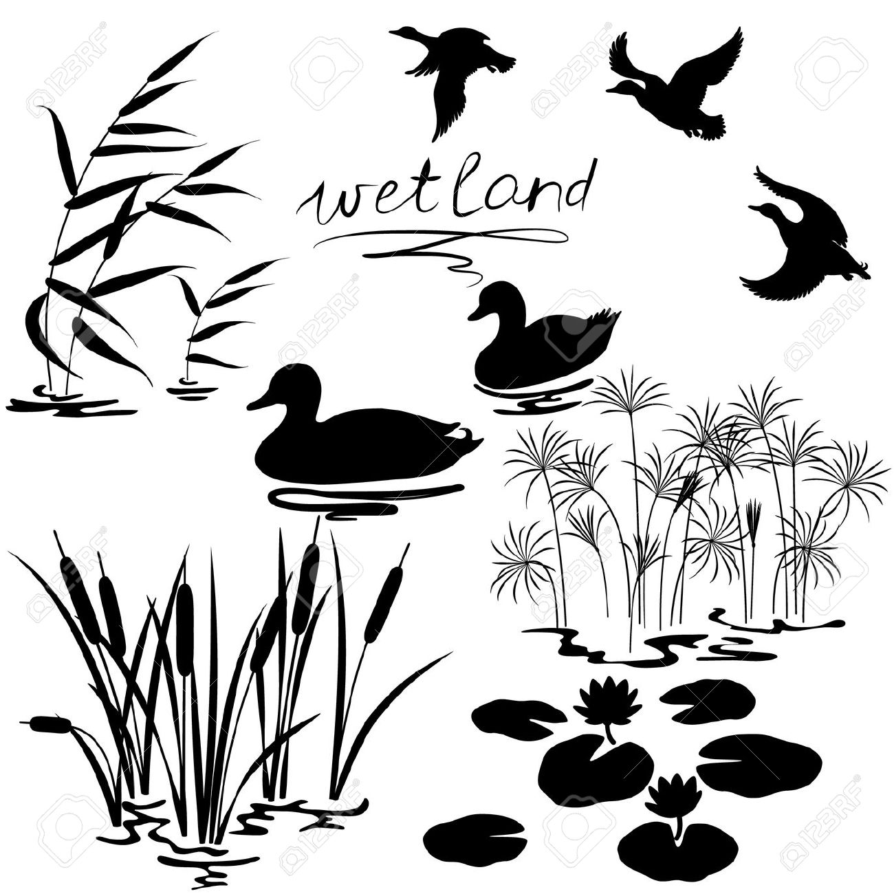 Wetland Cliparts