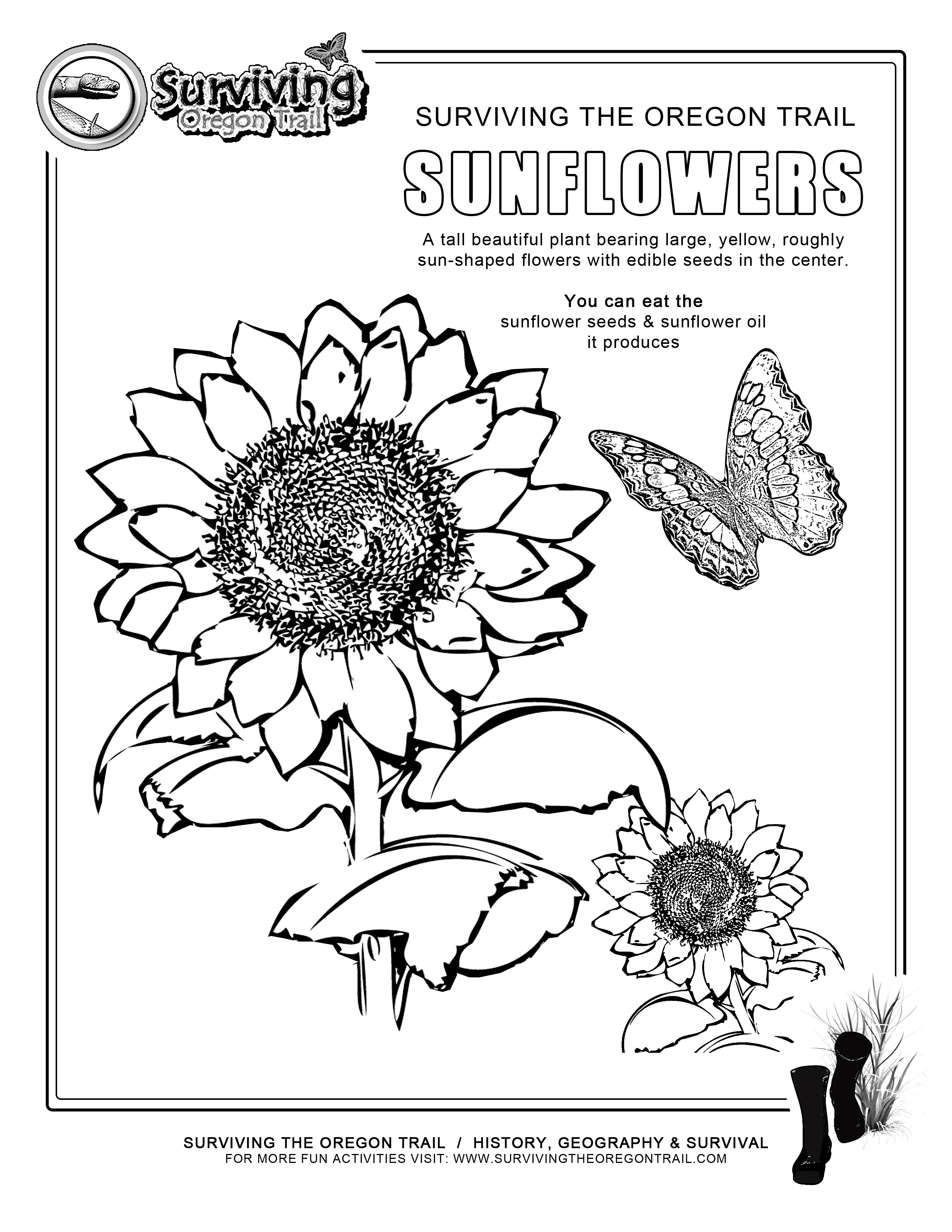 Sunflower Seed Page Coloring Pages