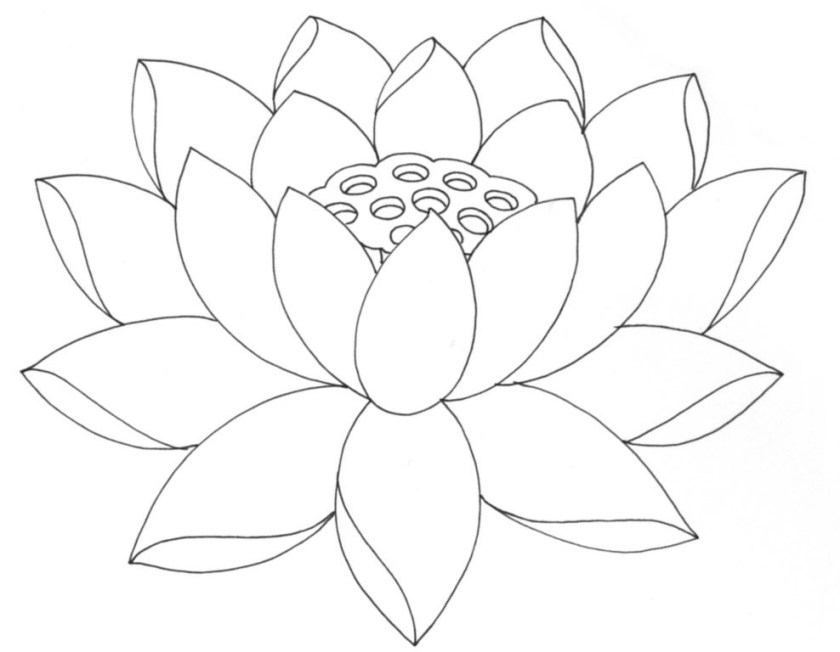 lotus outline  cliparts.co