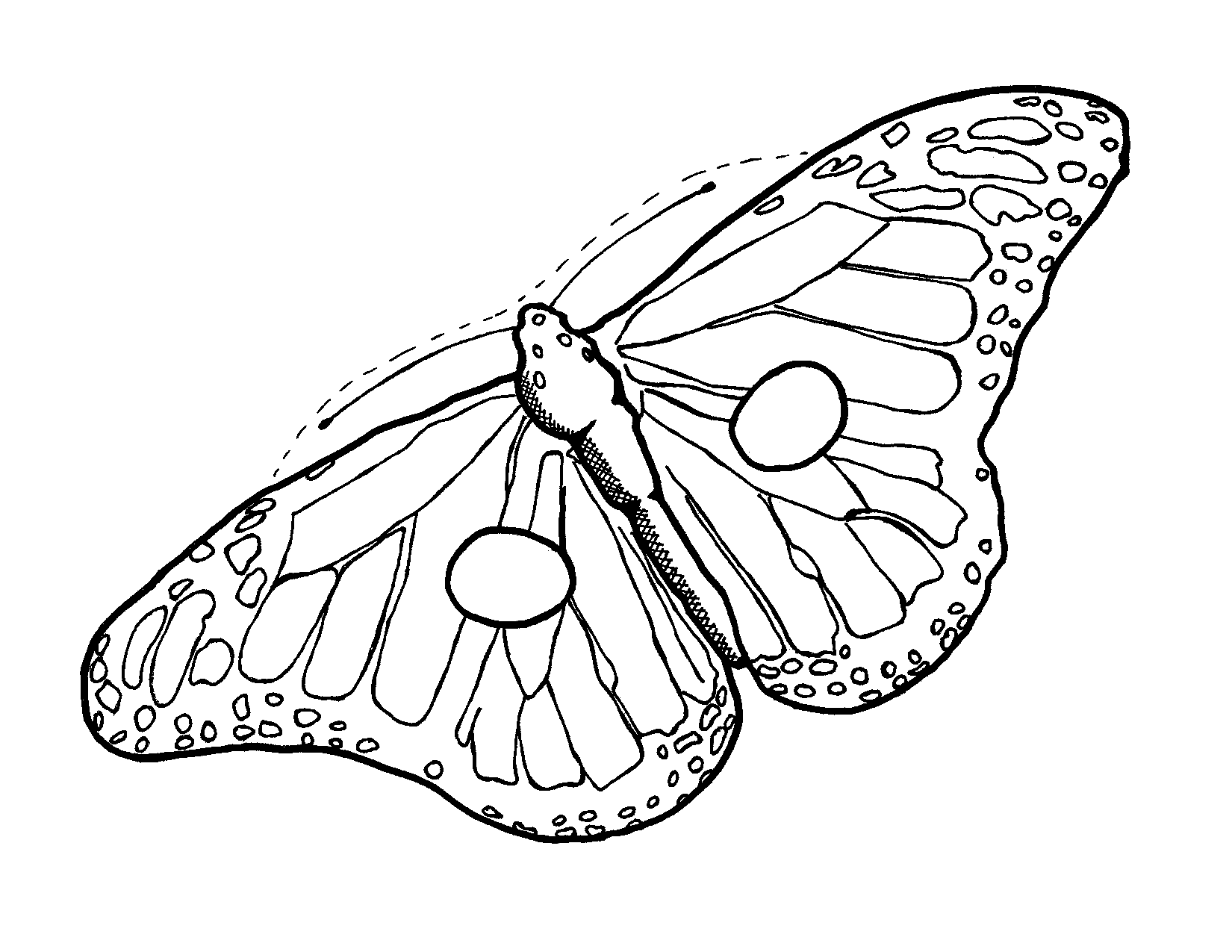 Monarch Butterfly Outline