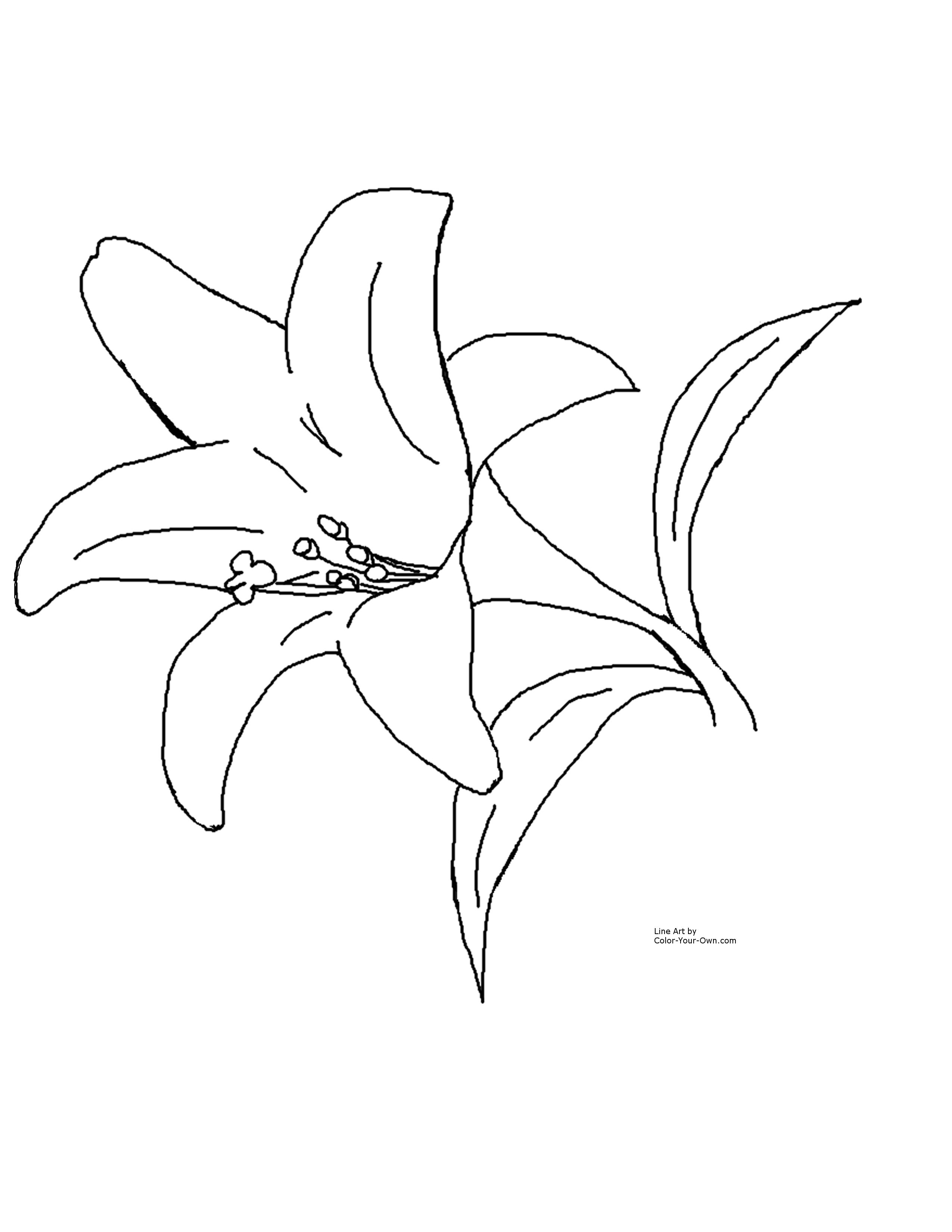 Images Of Easter Lilies