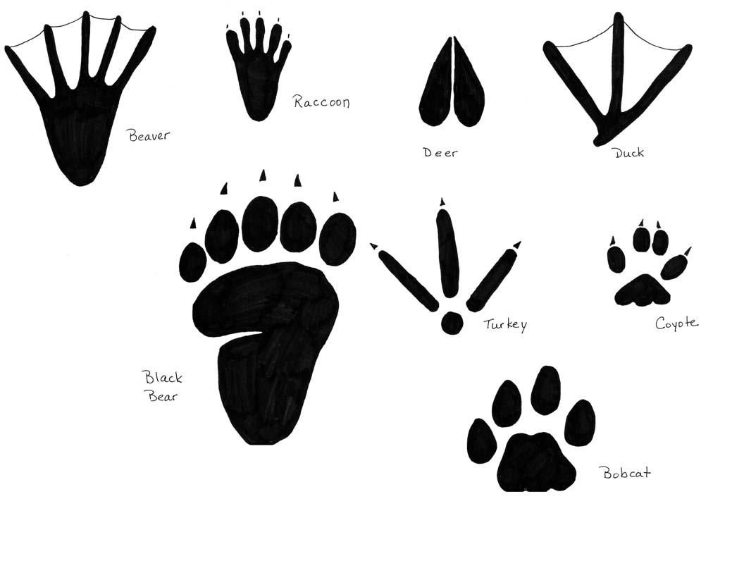 Free Coloring Pages Bobcat Footprint