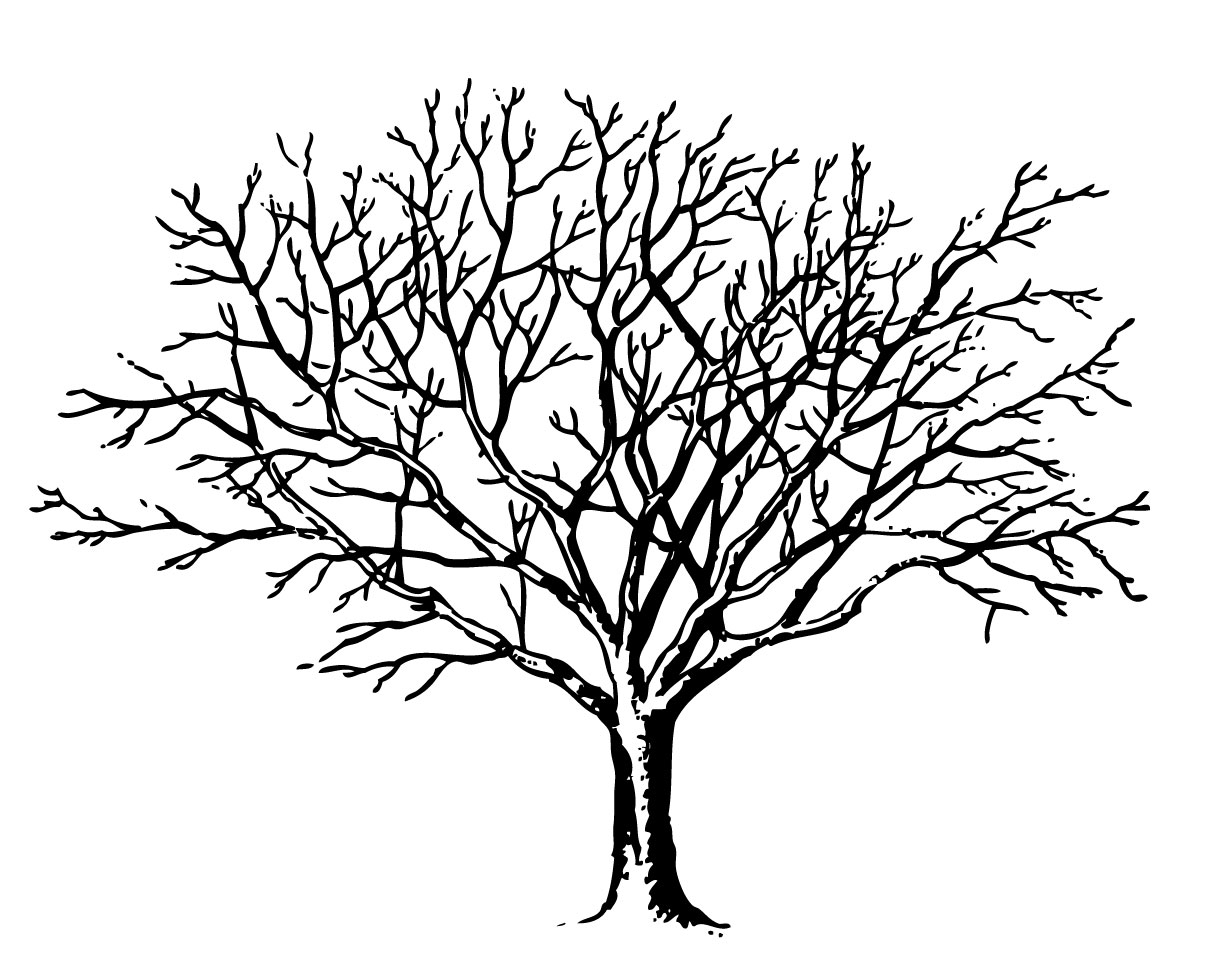 Images For Gt Simple Tree Without Leaves Clipart