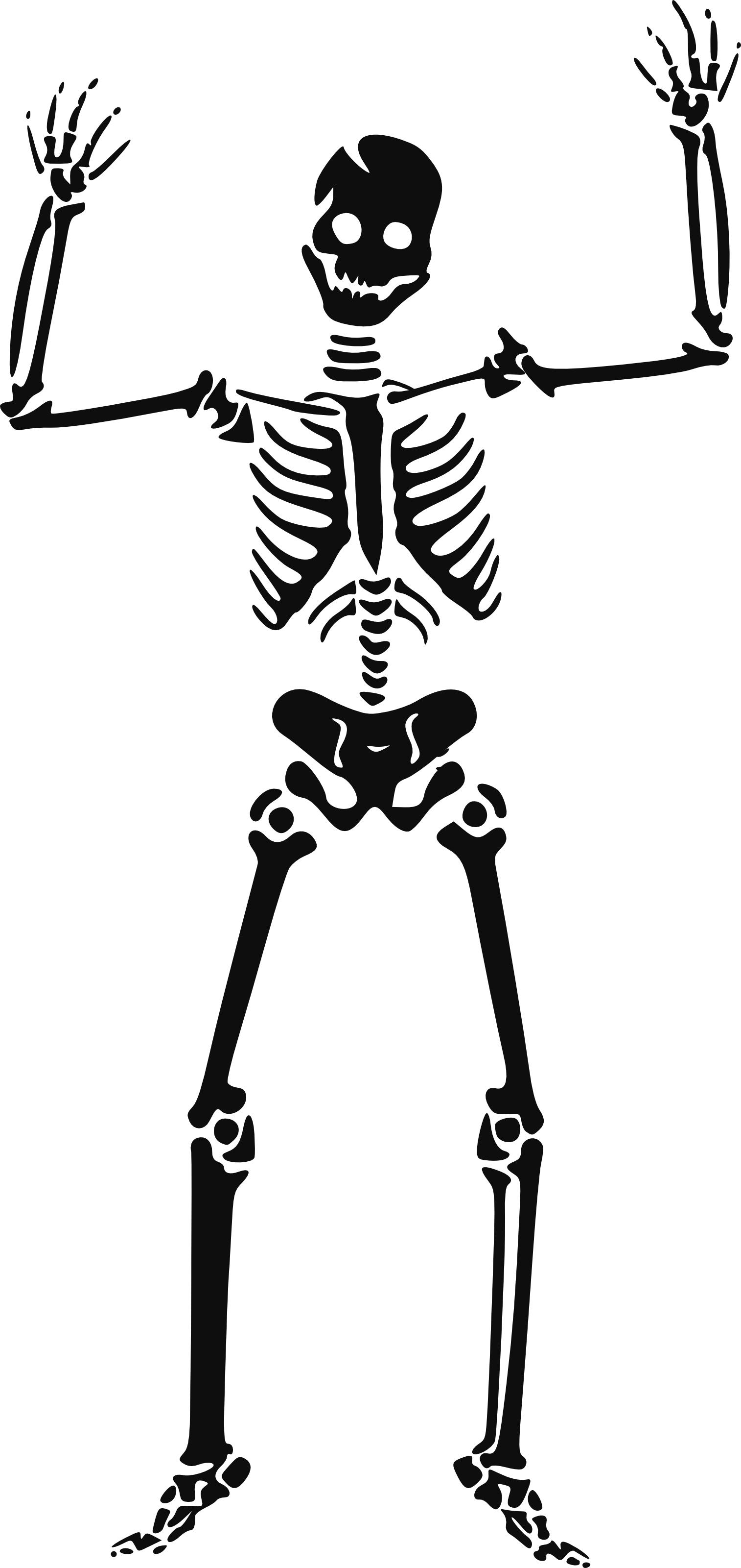 Clip Art Skeleton