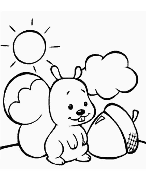 flying squirrel coloring page  cliparts.co