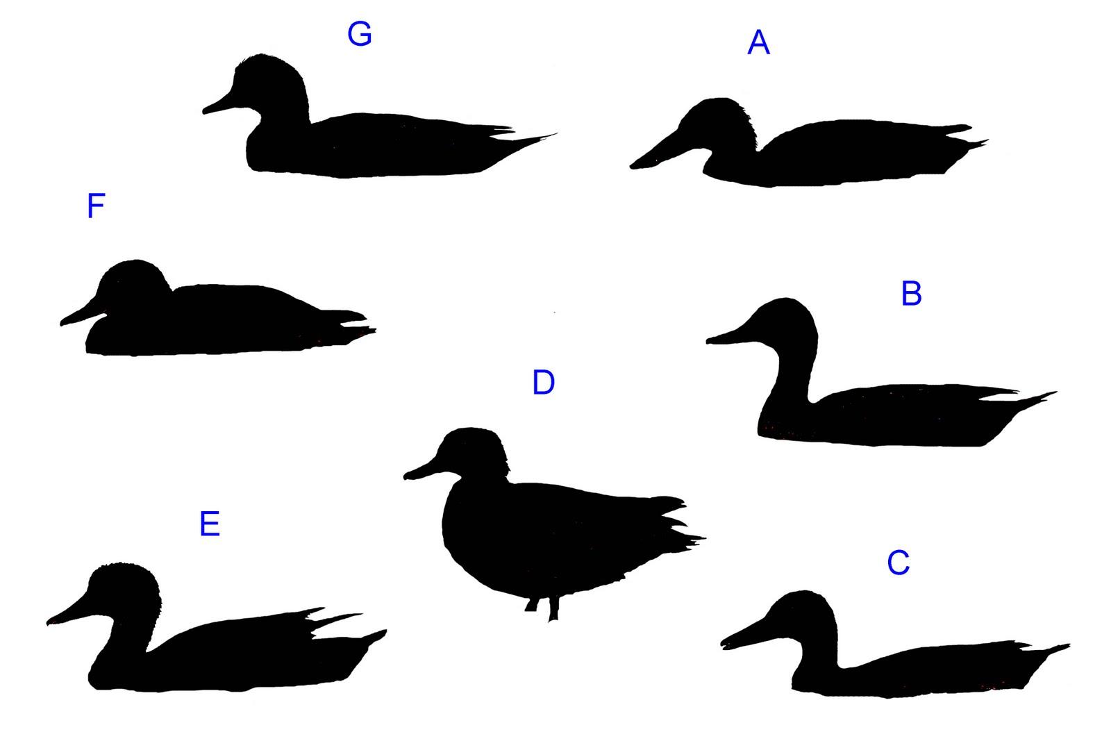 Duck Silhouette Clip Art