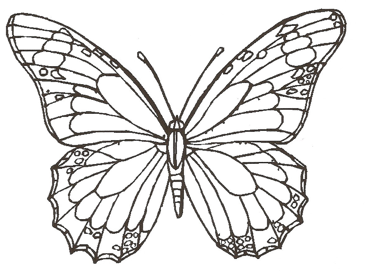 Cute Butterfly Line Drawing