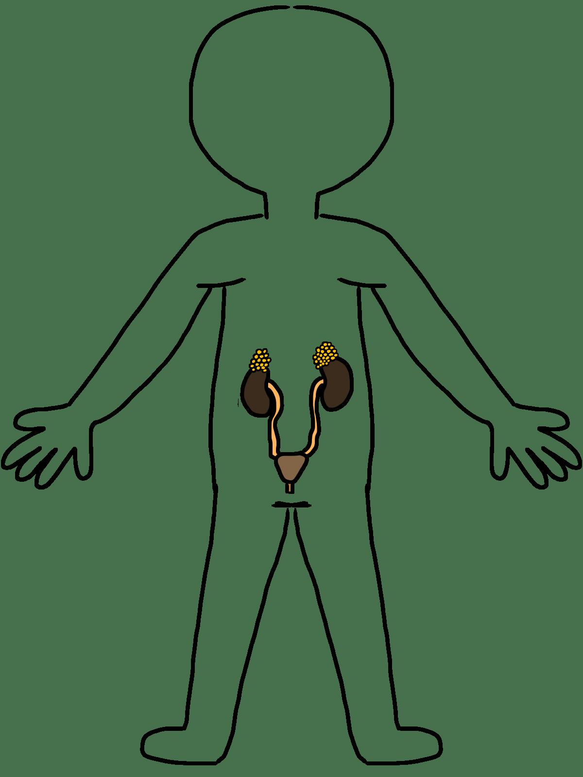 Skeletal System Clip Art