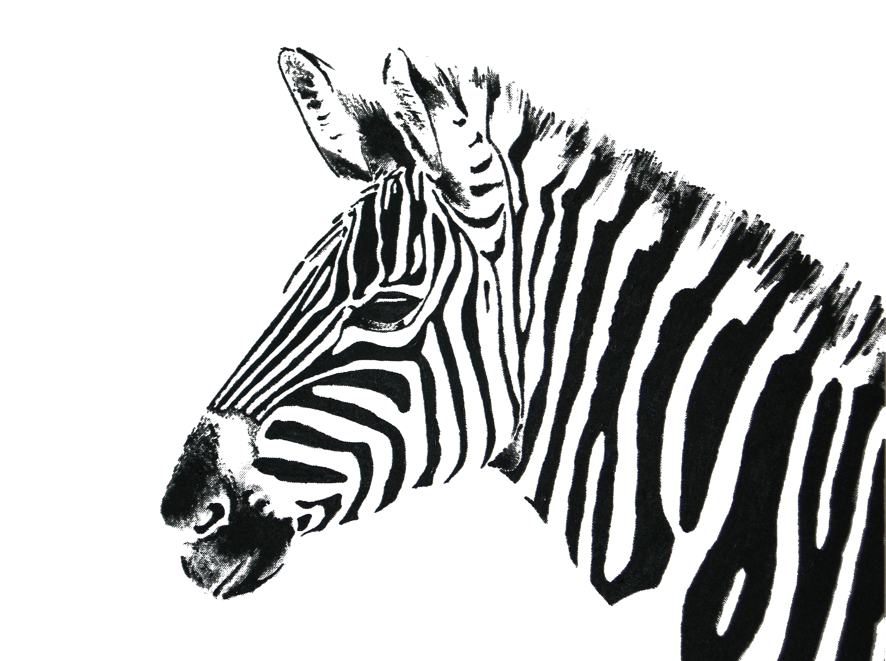 Black And White Animal Drawings