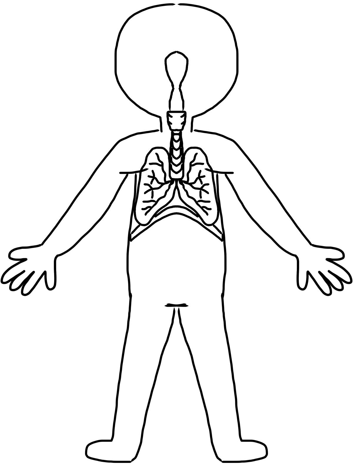 Circulatory System Clipart