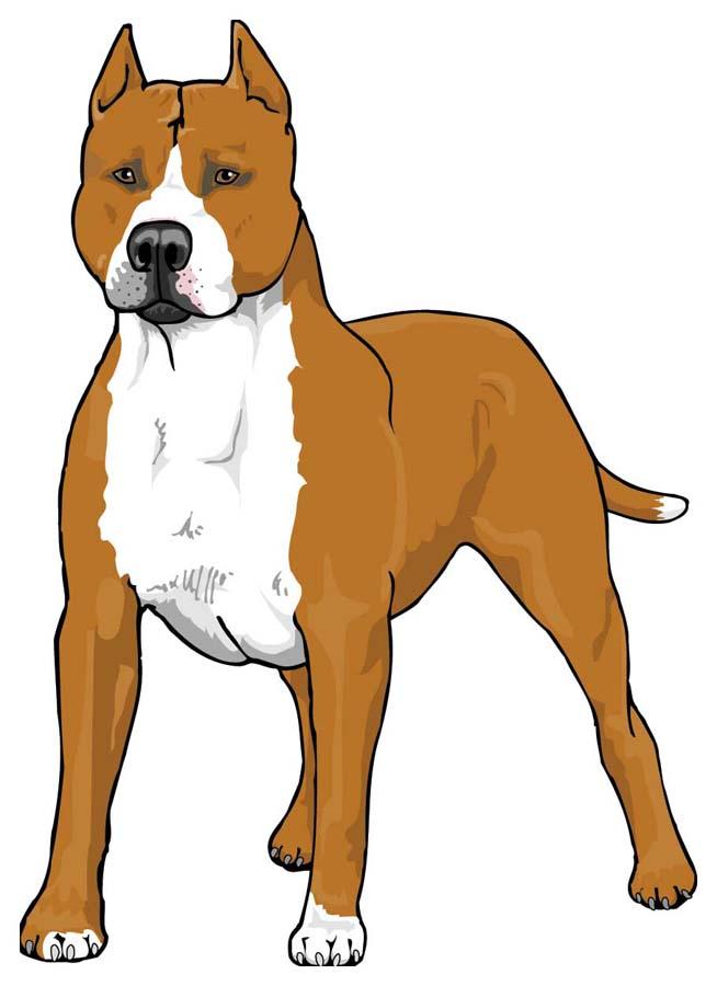 zcXepLA9i Drawing Pitbull Dog