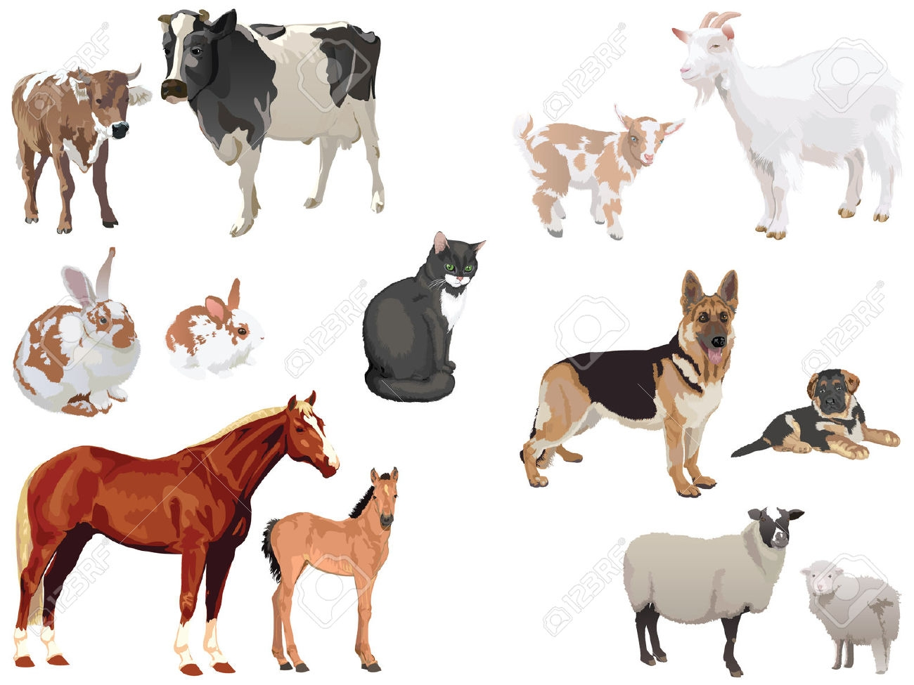 Animals Live In Land Clipart 10 Clipart Station
