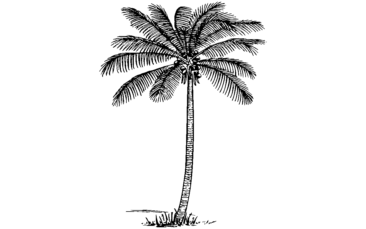 Coconut Tree Black And White Clipart Clipart Station