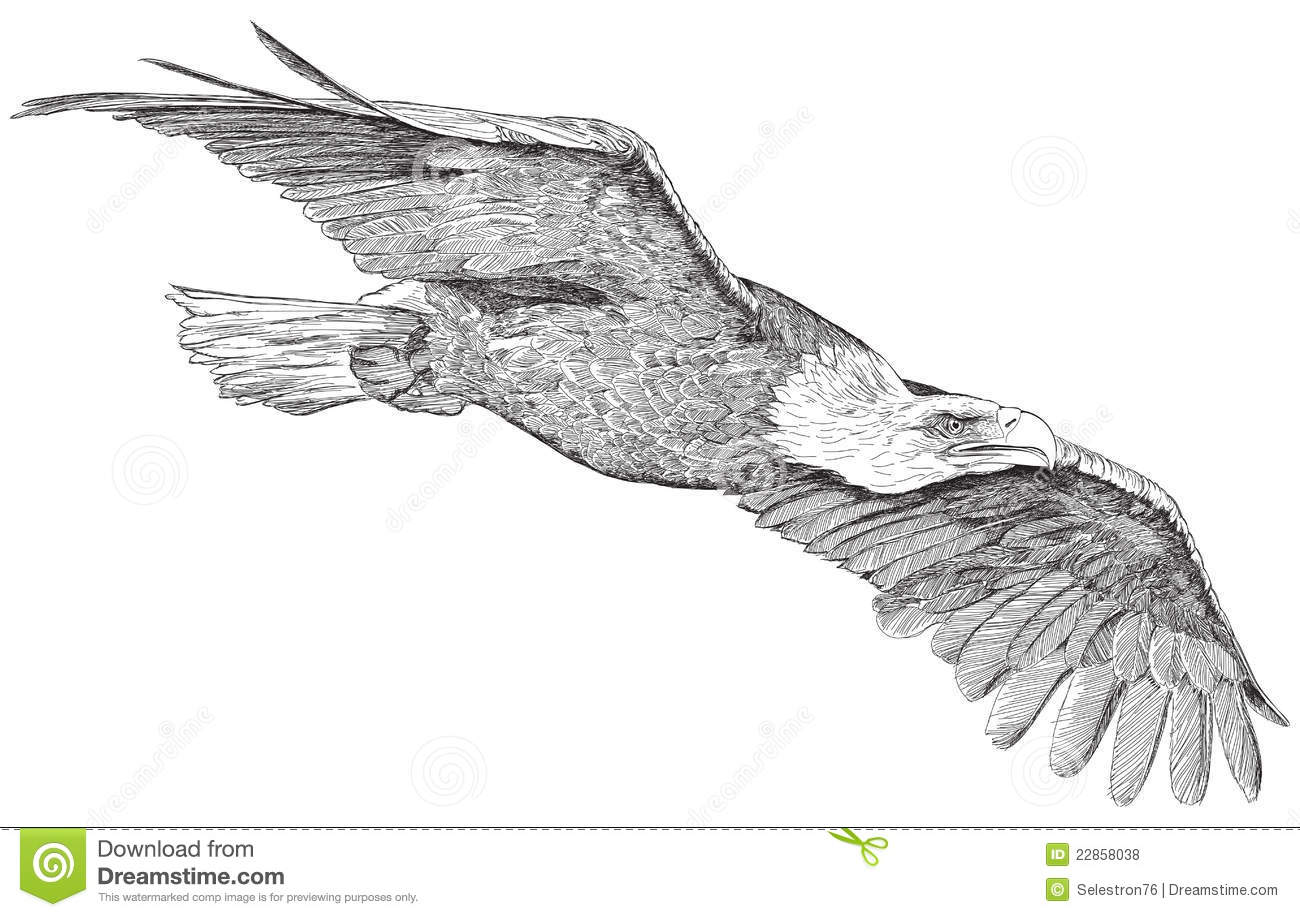Adler Free Clipart