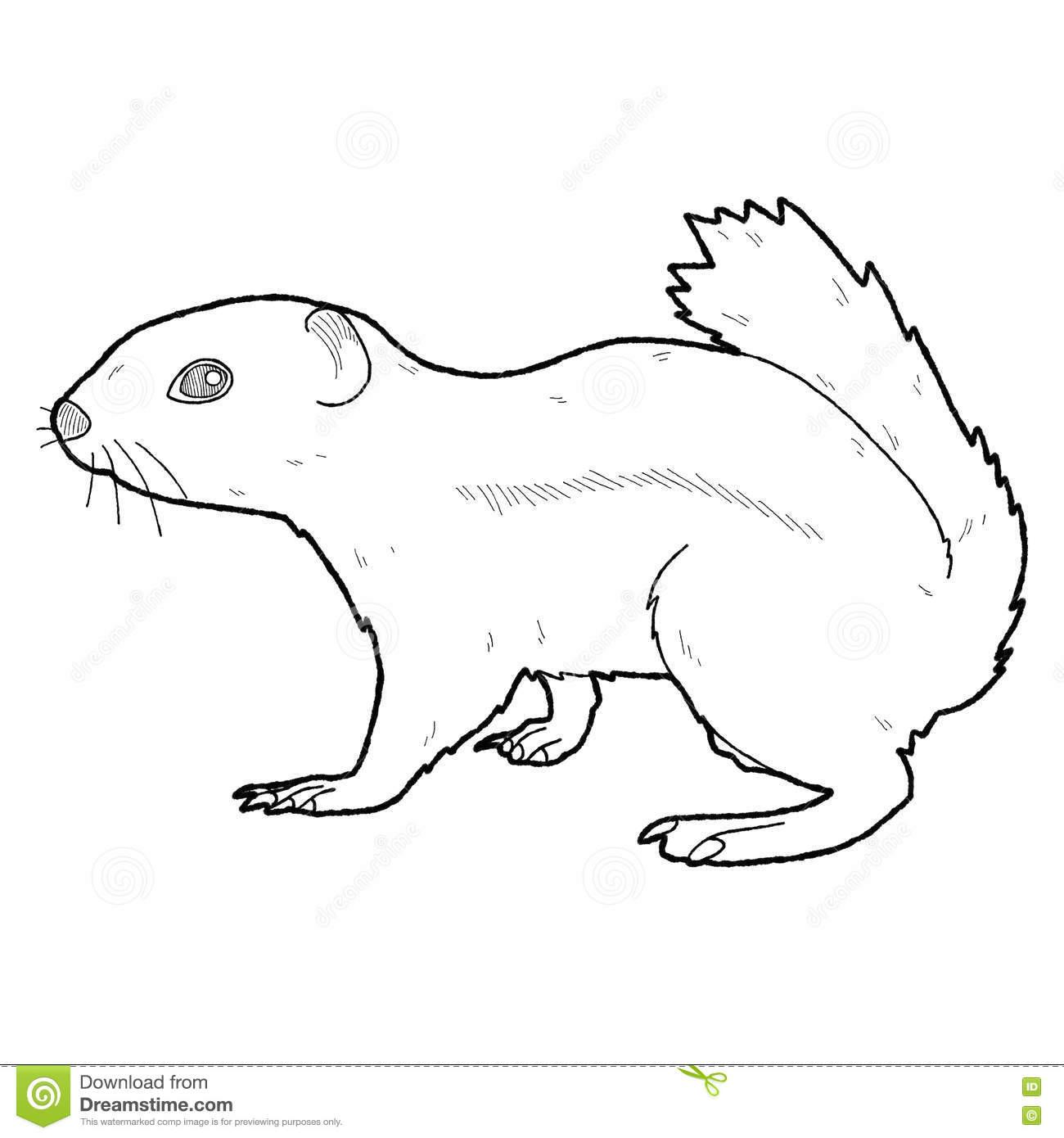 Arctic Ground Squirrel Clipart
