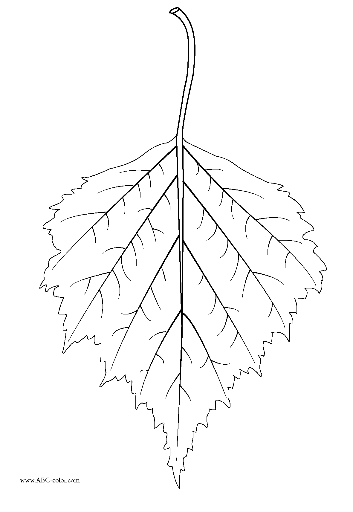 Birch Leaf Clipart 20 Free Cliparts