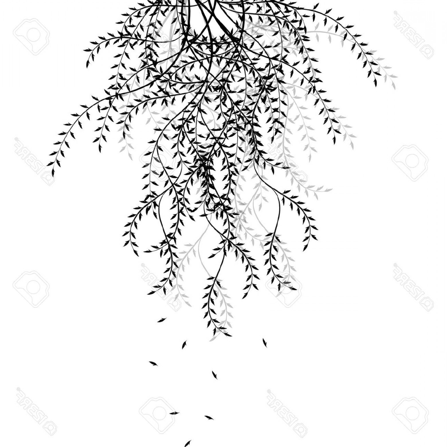 Black And White Willow Tree And A Fox Clipart 20 Free