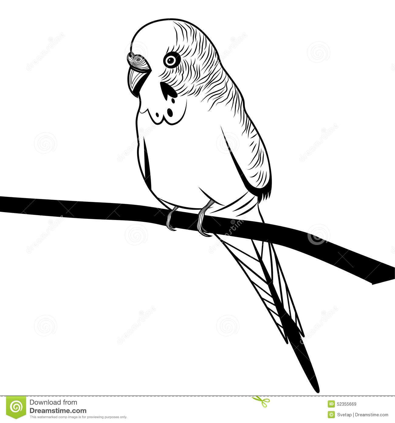 Budgerigar Parakeet Clipart