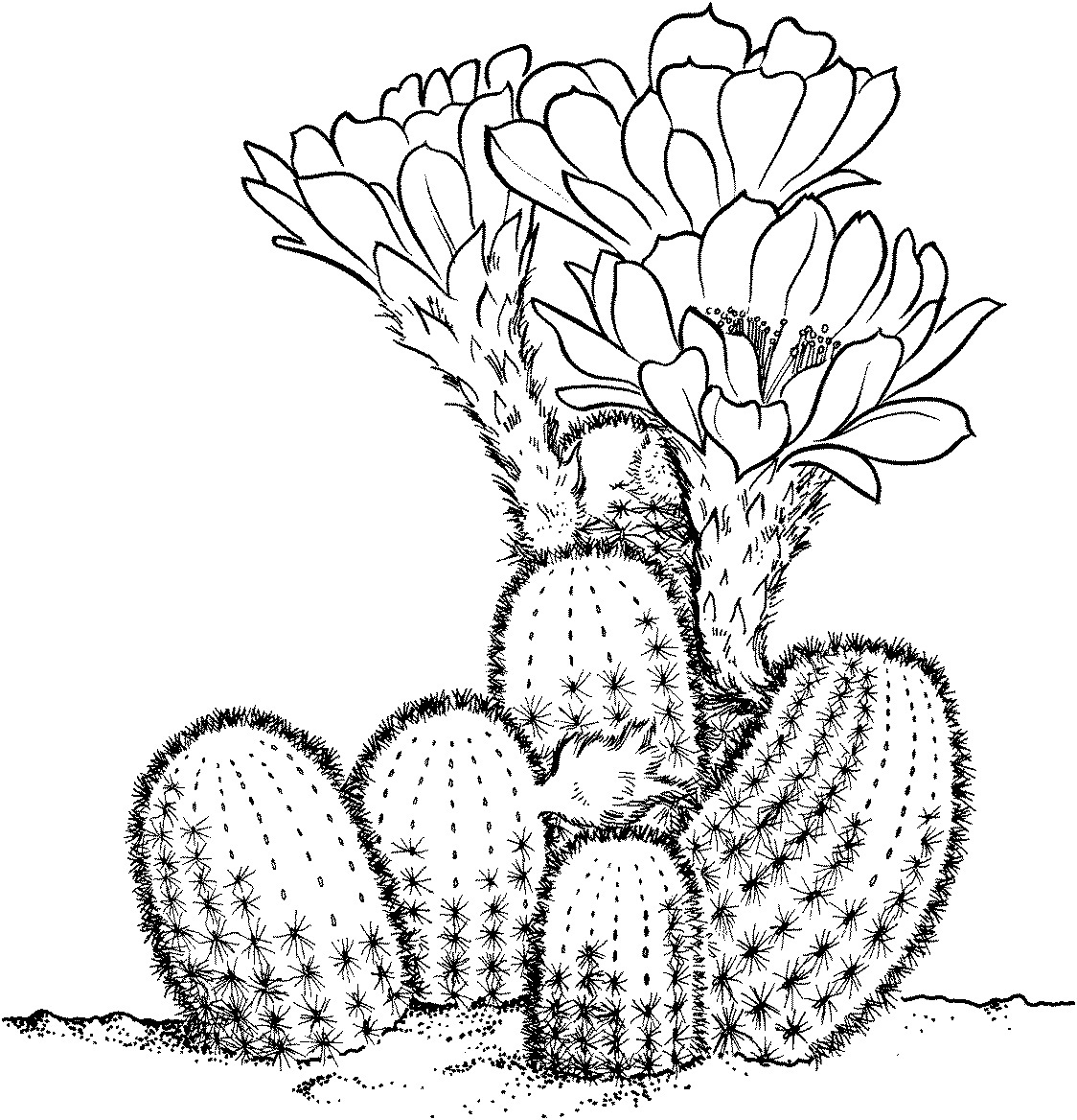 Cactaceae Whitish Clipart