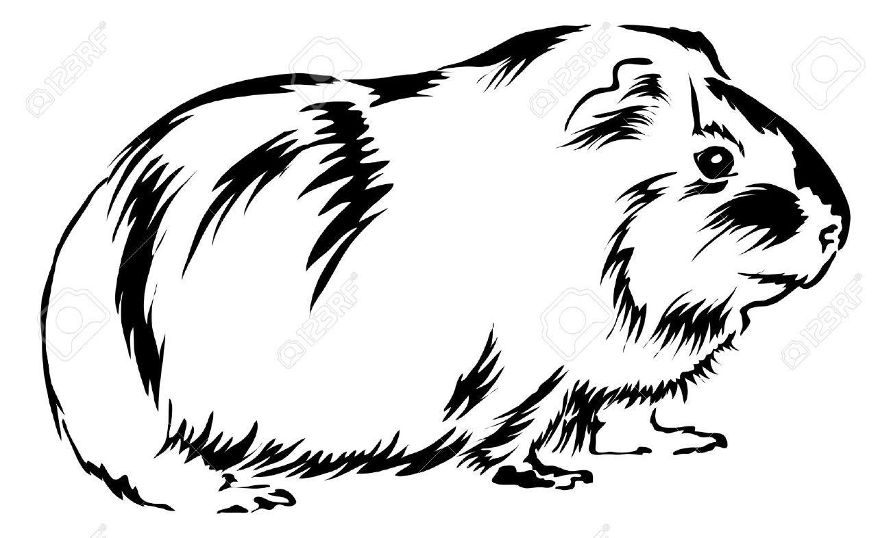 Cavy Clipart