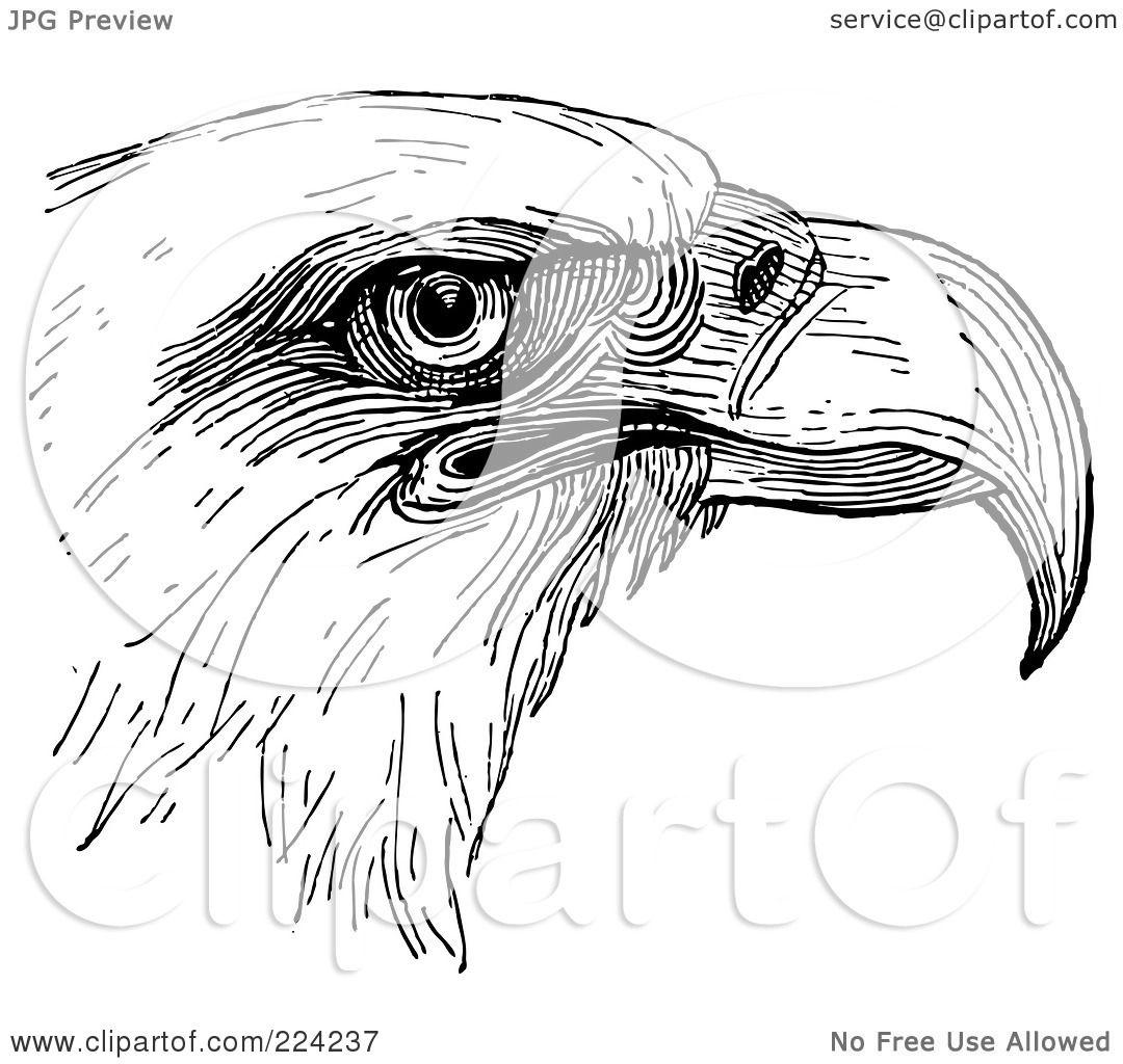 Chevron Eagle Head Clipart