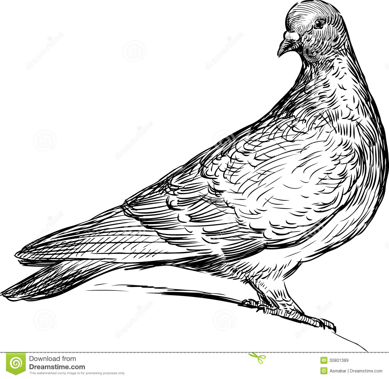 City Pigeons Clipart 20 Free Cliparts
