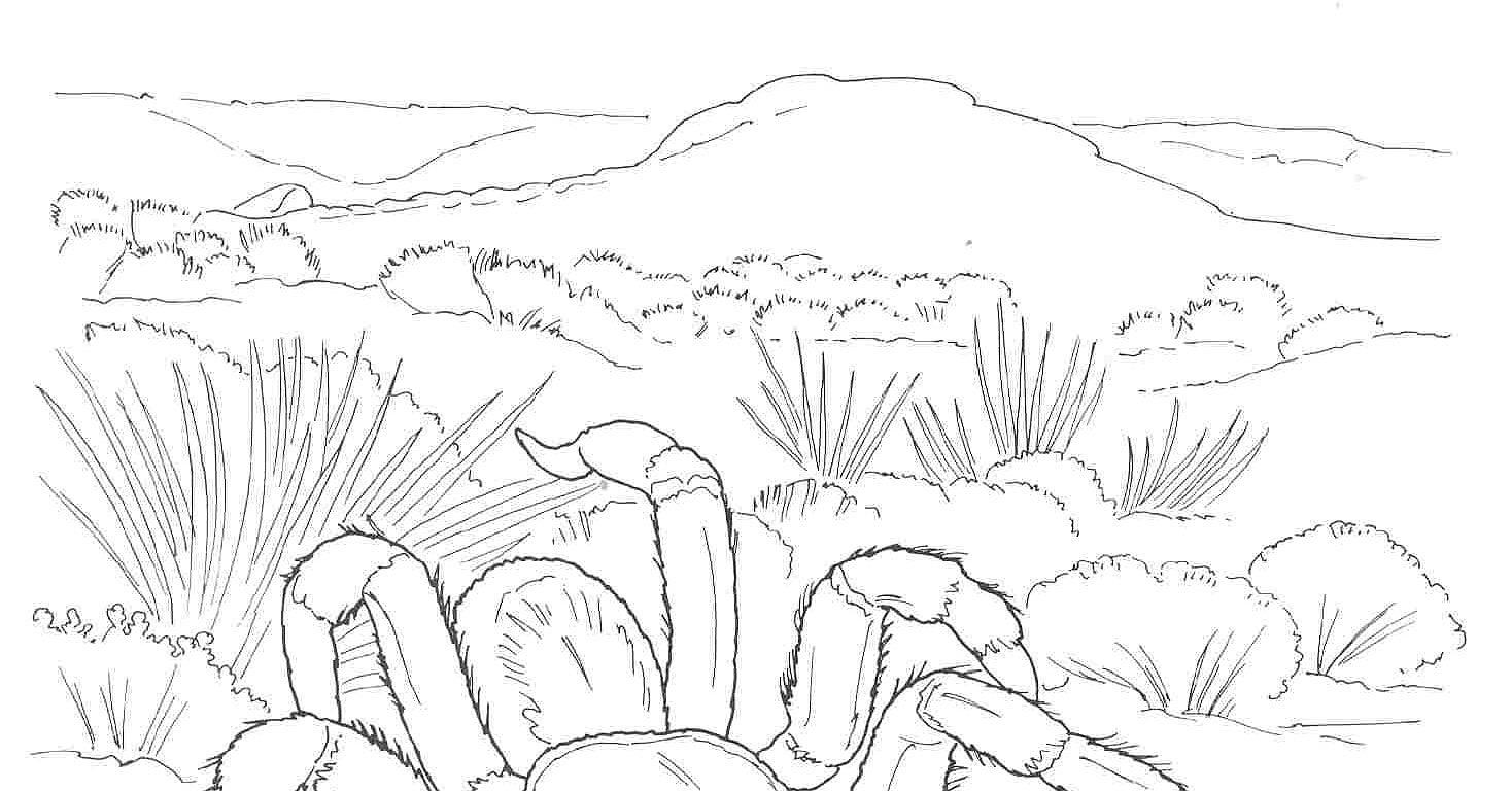 Desert Biome Outline Clipart
