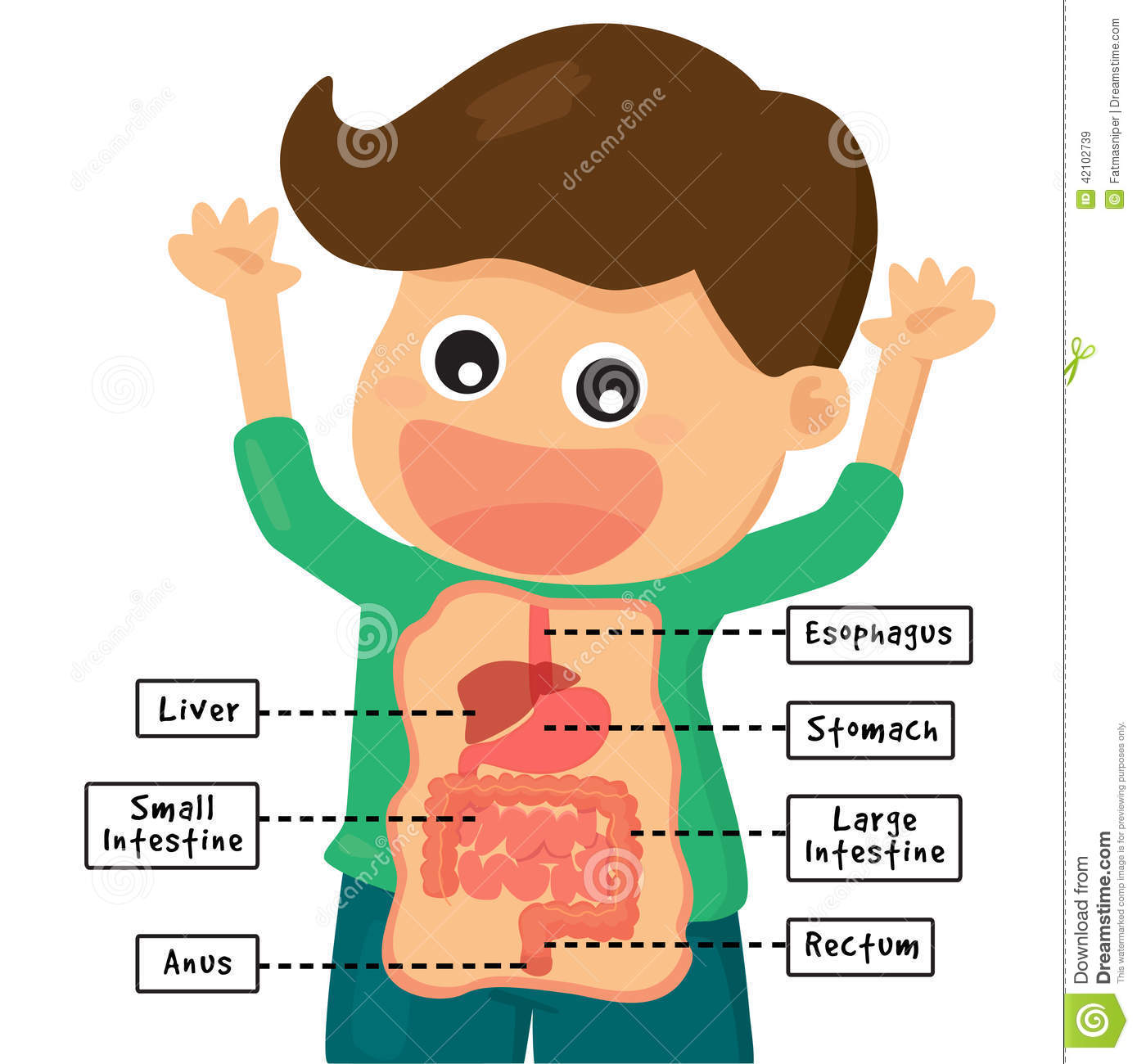 Digestion Clipart
