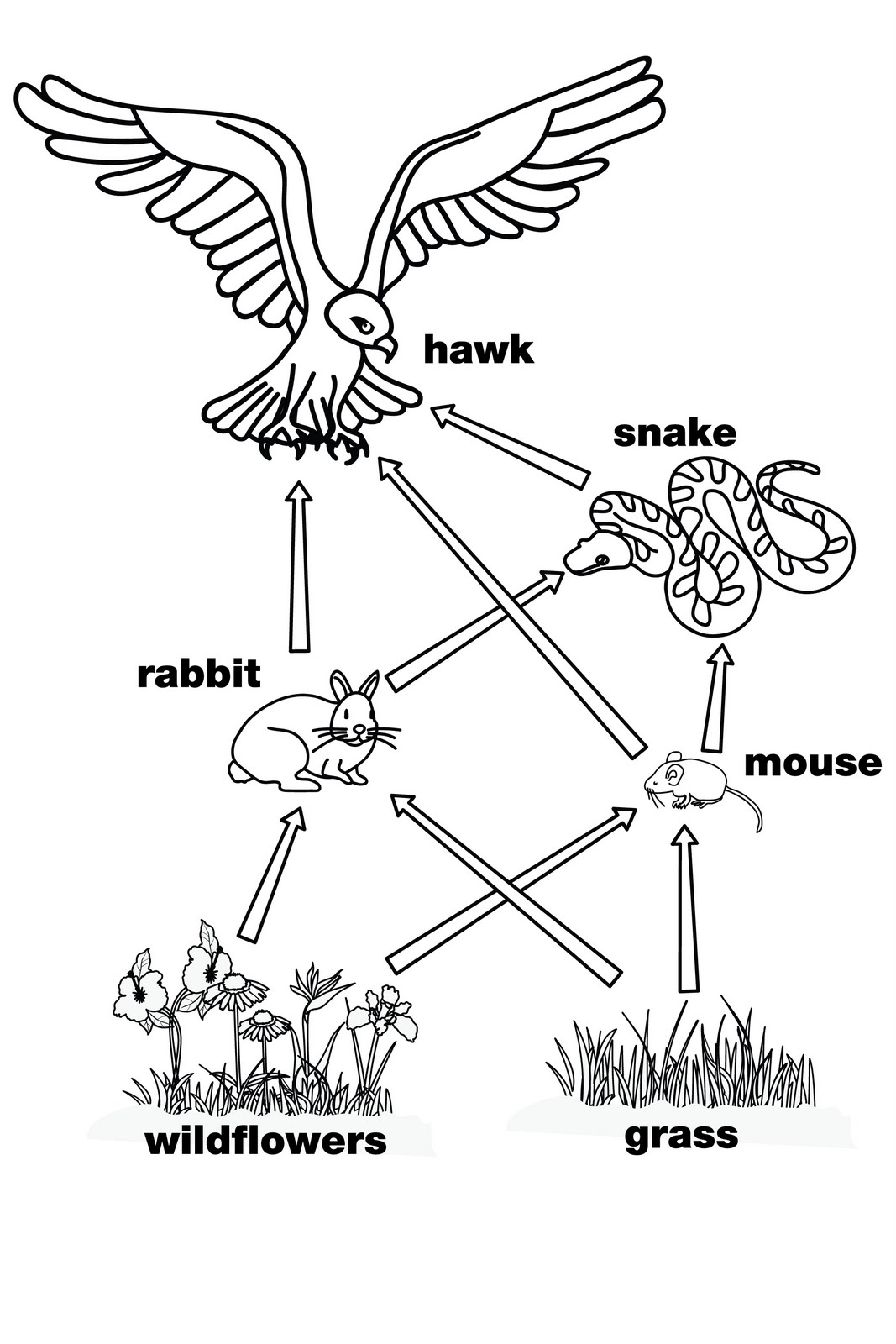 Food Chain Clipart Black And White