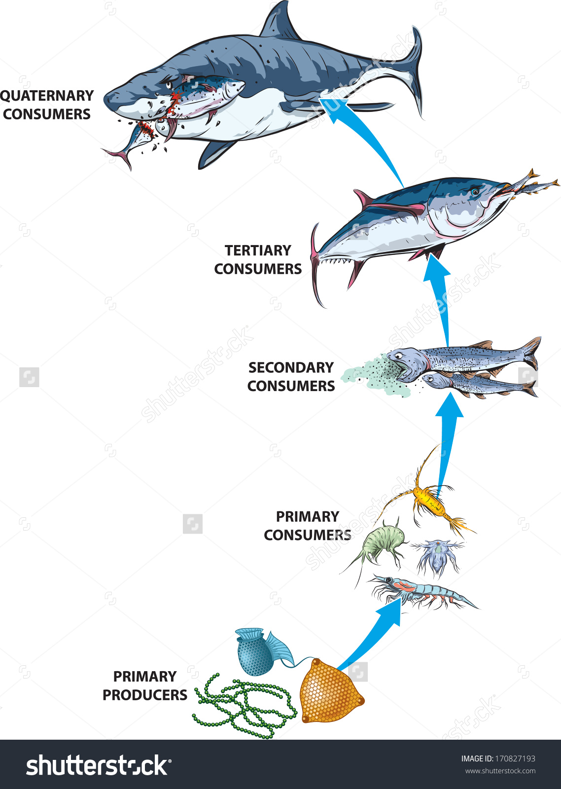 Food Chain Clipart Black And White 20 Free Cliparts