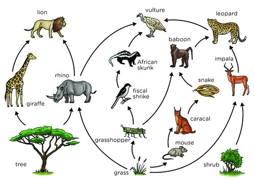 Food Web In Africa Clipart Clipground