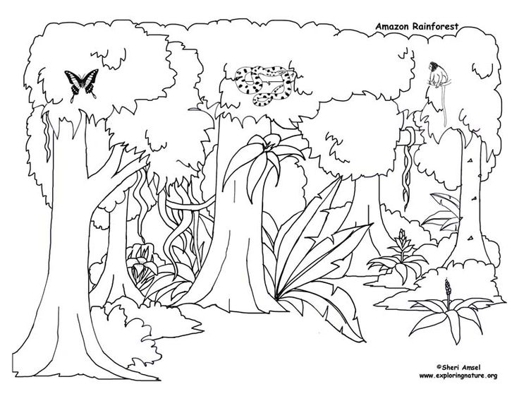 Diagram Blank Flower Diagram Picture Clipart Best Diagram Schematic