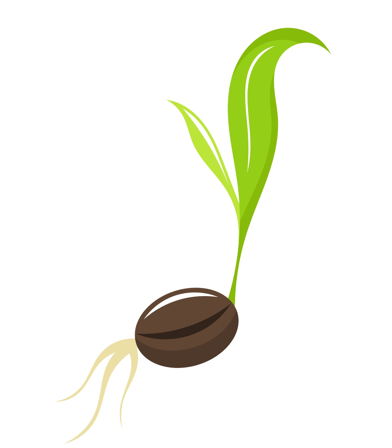 Seed Clipart