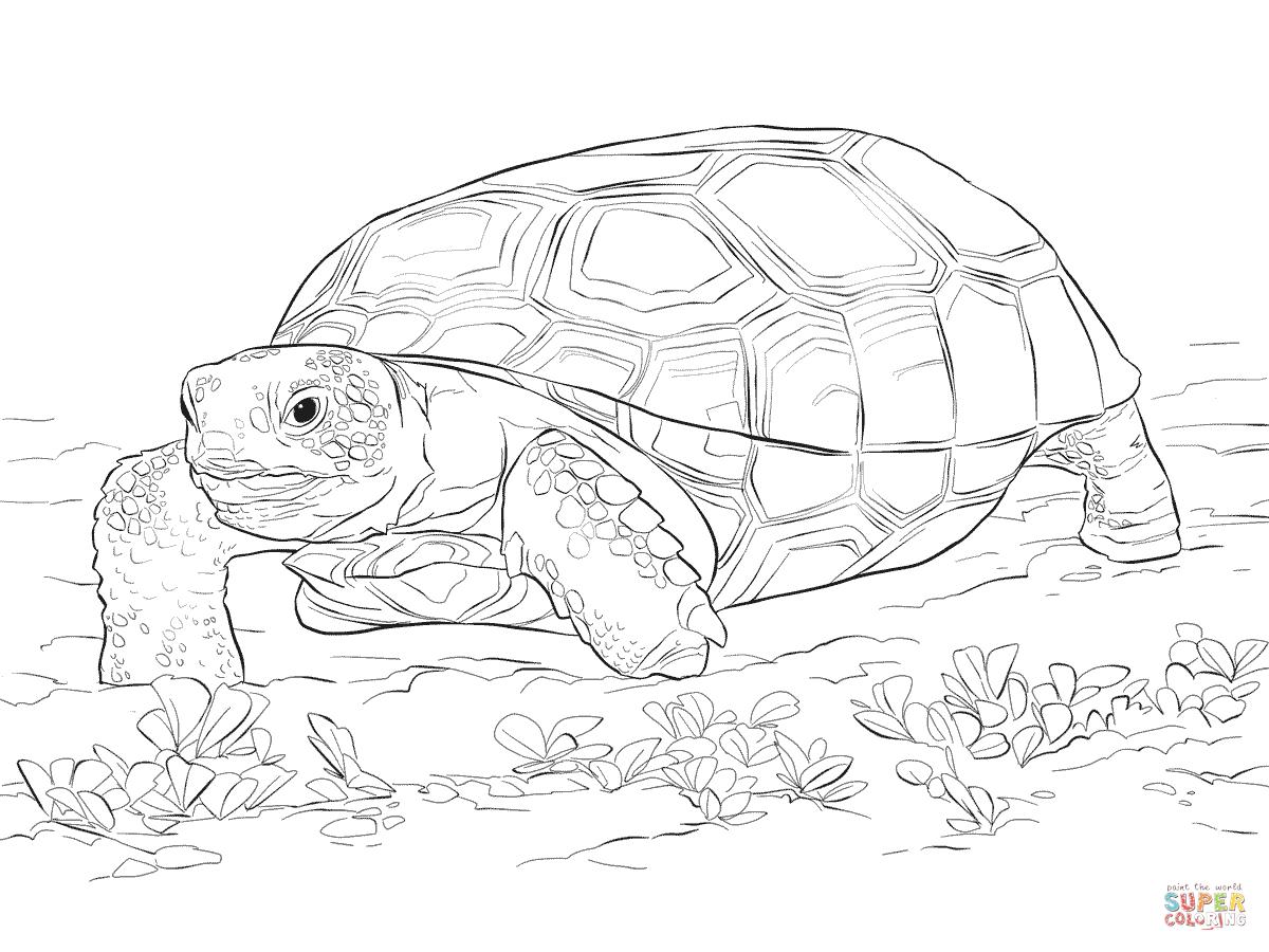 Gopher Tortoise Clipart