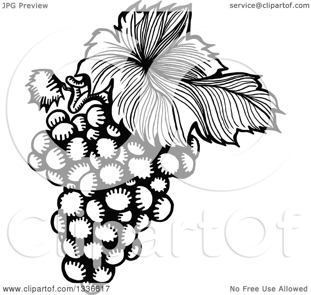 G S No Leaf Outline Clipart Black And White