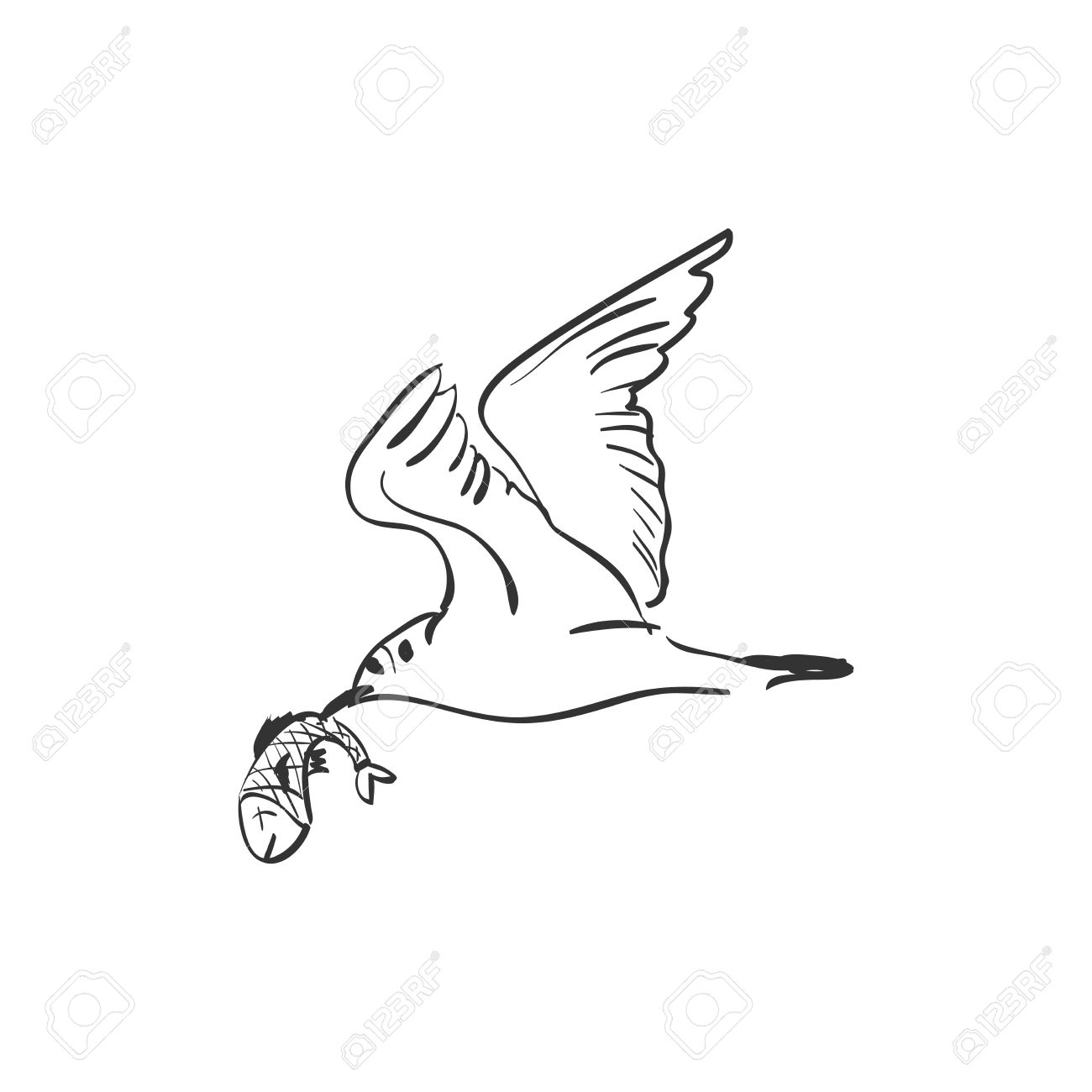 Gull Feathers Clipart