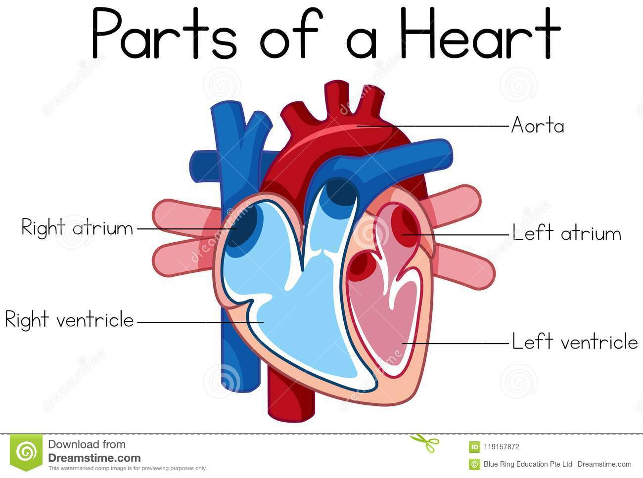 Heart Diagram Clipart 10 Free Cliparts
