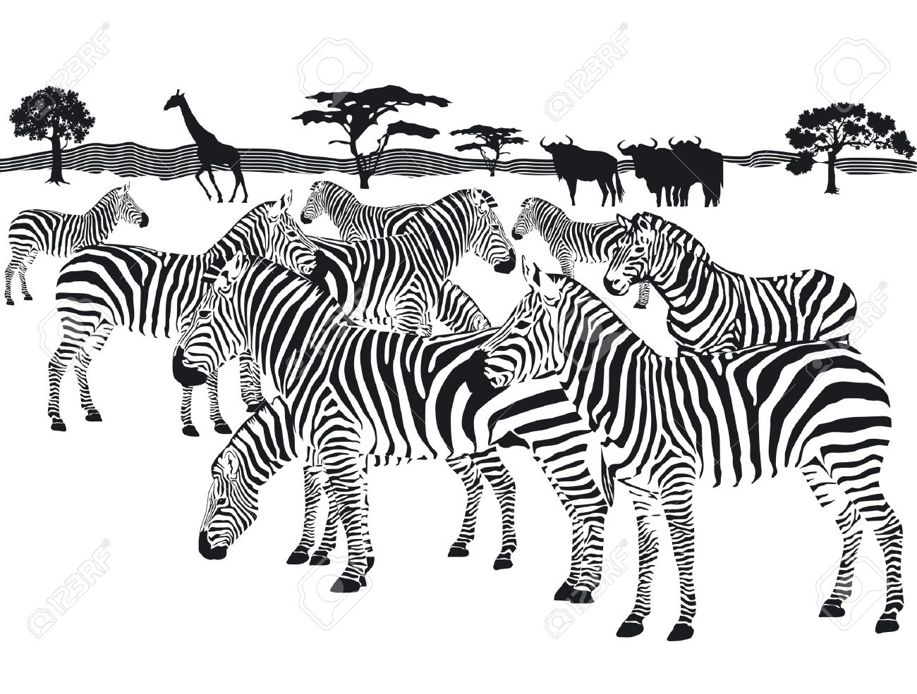 Herd Of Zebras Clipart
