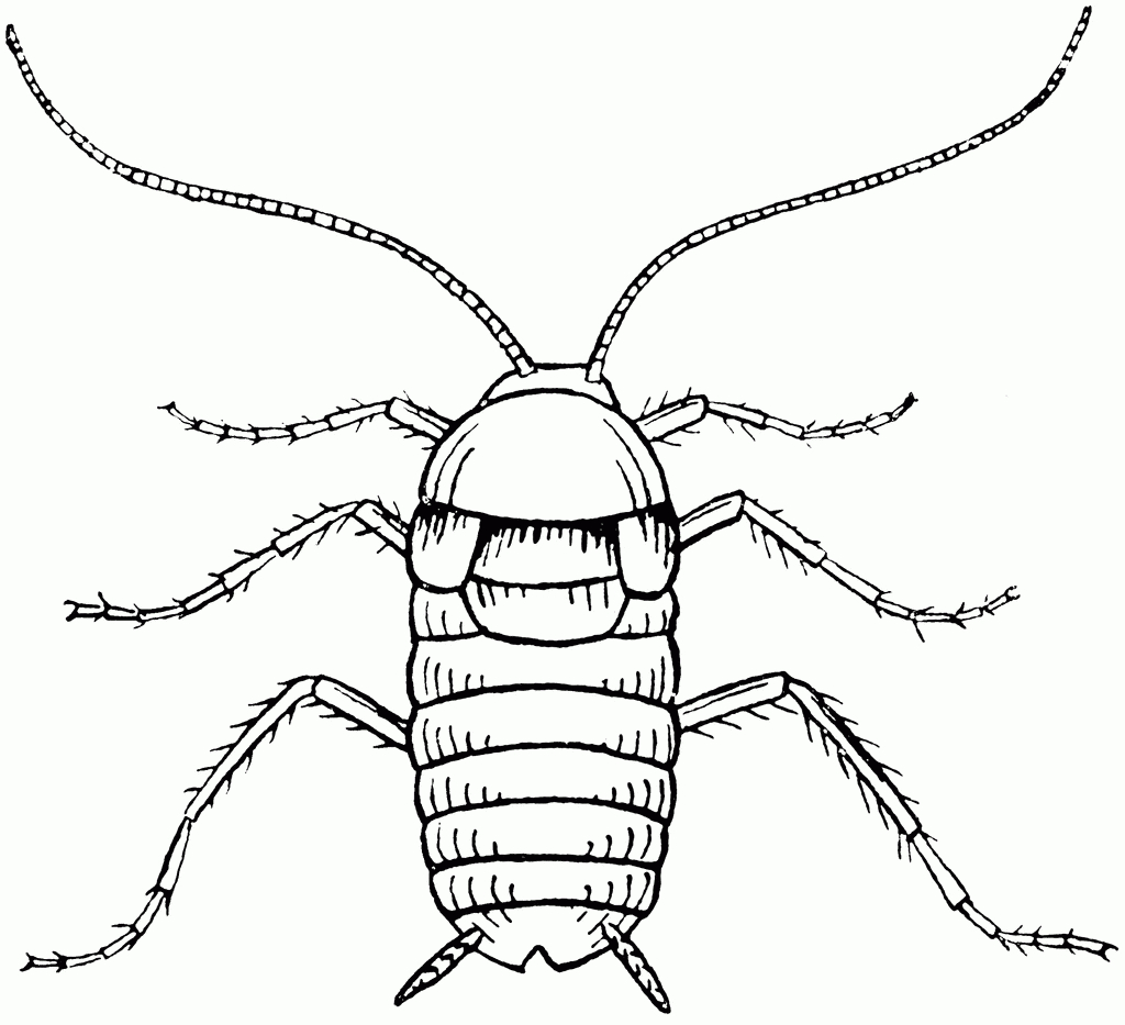 Hissing Cockroach Clipart 20 Free Cliparts