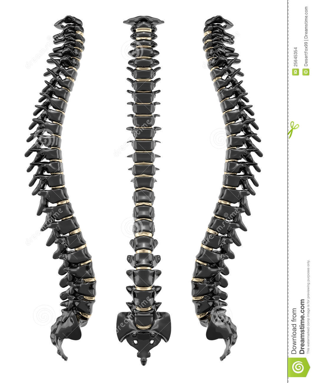 Human Spine Clipart