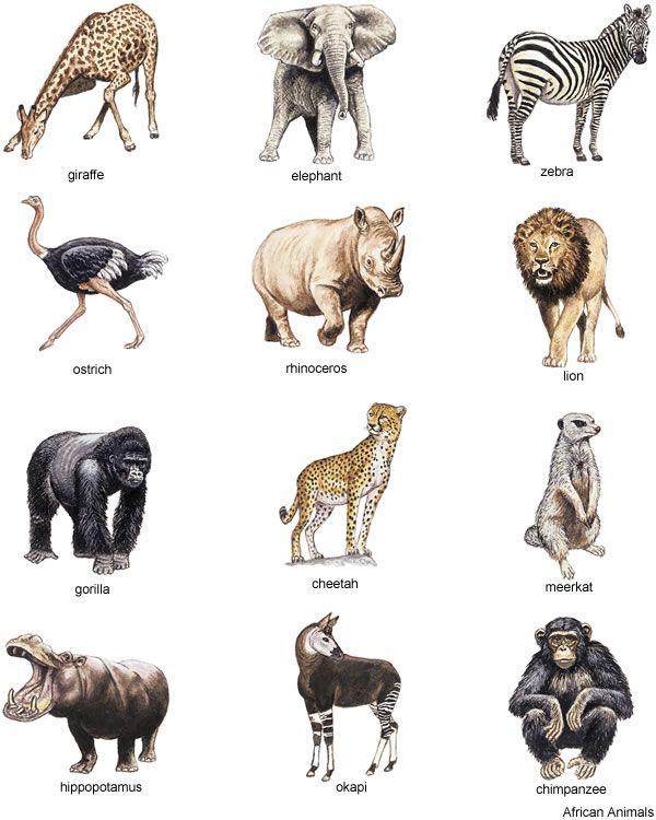 Black Guide Safari White And