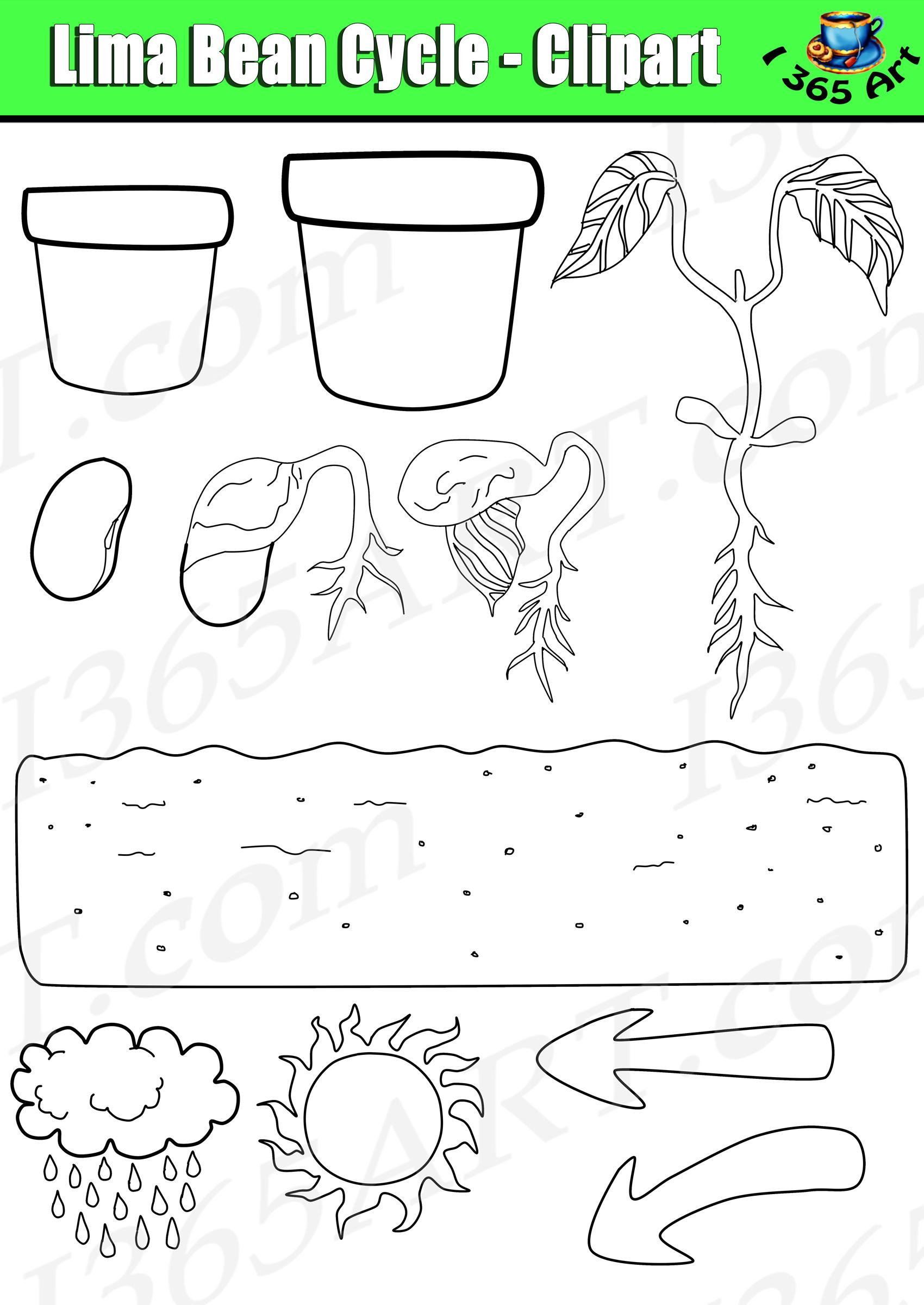 Lima Bean Plant Clip Art 10 Free Cliparts